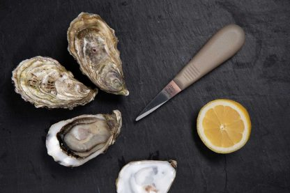 Lancette à huître