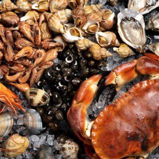 """Plateau de fruits de mer """"Ostrea"""""""